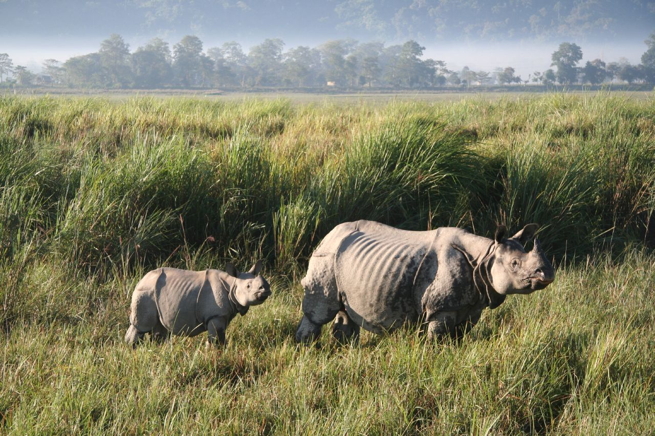 kaziranga national park Searching for wildlife tour package india kaziranga national park of assam is one of the best wildlife tourism destination india this kaziranga national park to get inscribed in the world heritage site list 1985.