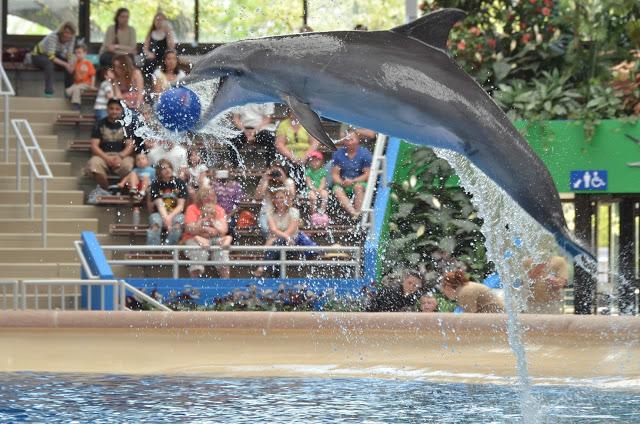 ve-may-bay-di-Chicago-Brookfield-Zoo2