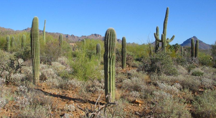 arizona-sonora-desert-museum2